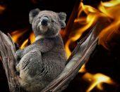 Spasimo Australiju nožem i vilicom