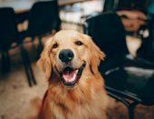 Psi smanjuju rizik od pojave shizofrenije