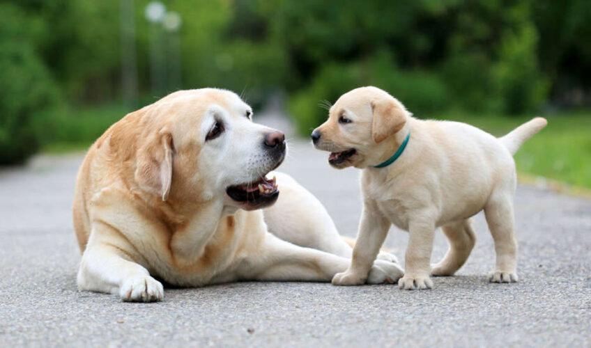 Psi prepoznaju loše ljude