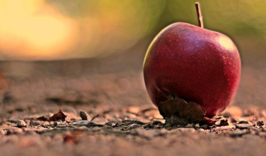 Vrijedi li 'pravilo 5 sekundi' kad nam padne hrana ili je to samo mit?
