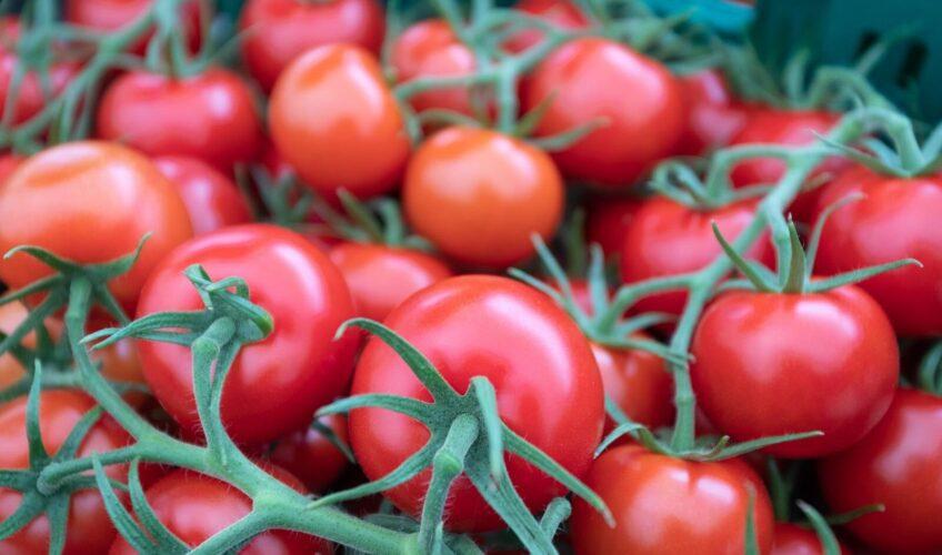 Velika crvena prevara: Otkrili su zašto rajčice više nemaju 'okus'