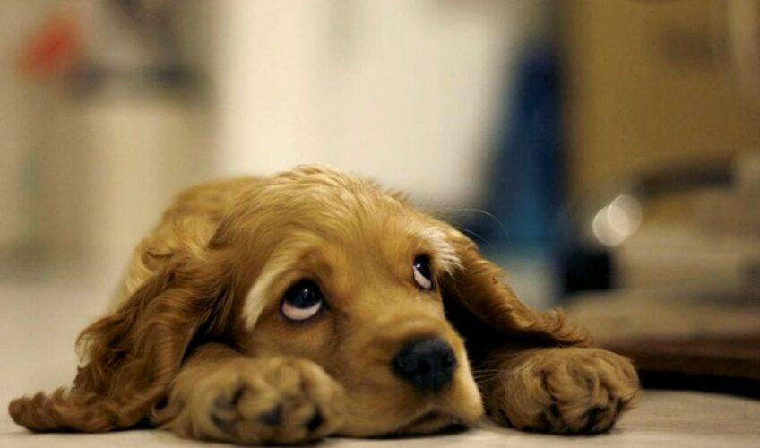 Što ne smijete davati psima