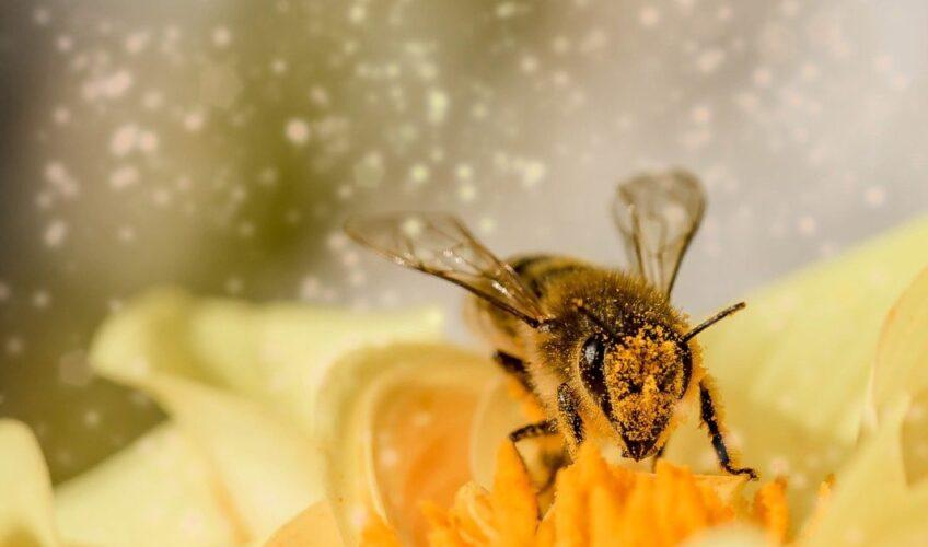 Danas je Svjetski dan pčela, evo kako im možemo pomoći