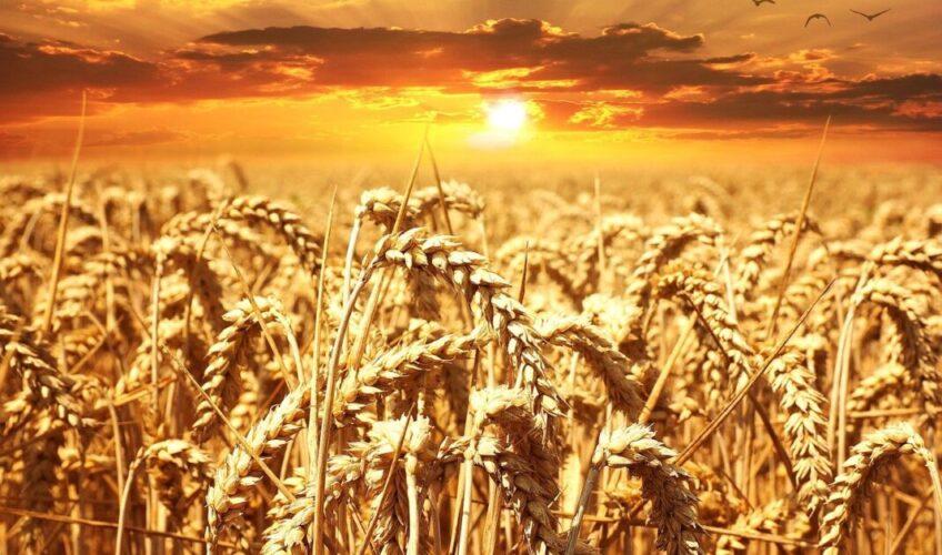 Stiže treći val poskupljenja brašna i kruha